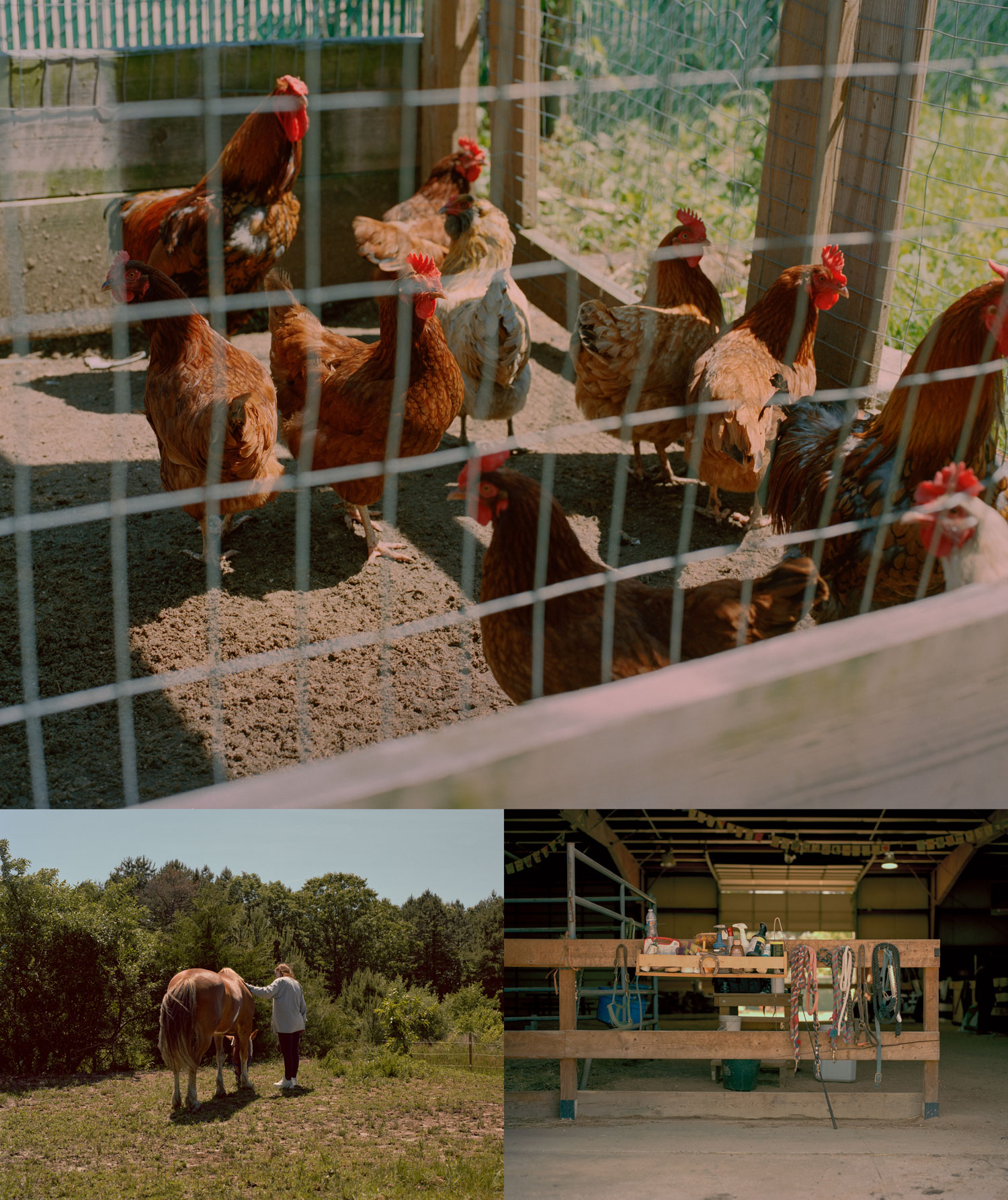 Top: Chickens are among the livestock tended to on Hope Farm. Bottom left: On Hope Farm, those in short- and long-term recovery are offered equine therapy, where handling horses is used as a means to rebuilding communication skills after periods of feeling isolated or disconnected. Bottom right: Farm hands store their tools in a maintenance shed and horse stable.